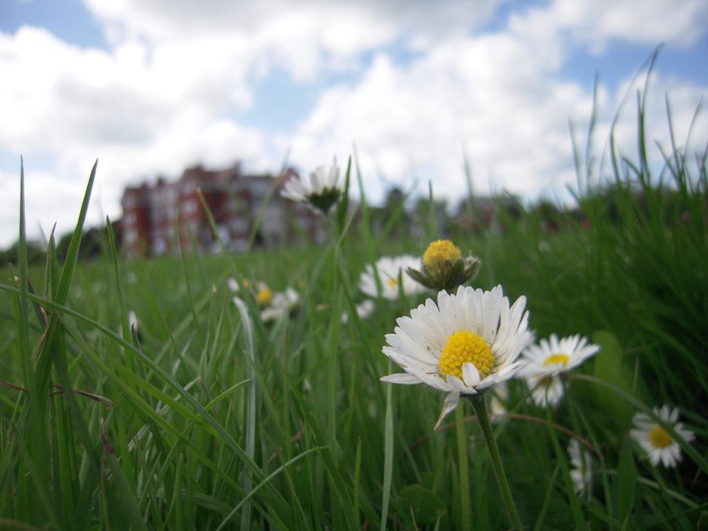 夏を待つ花