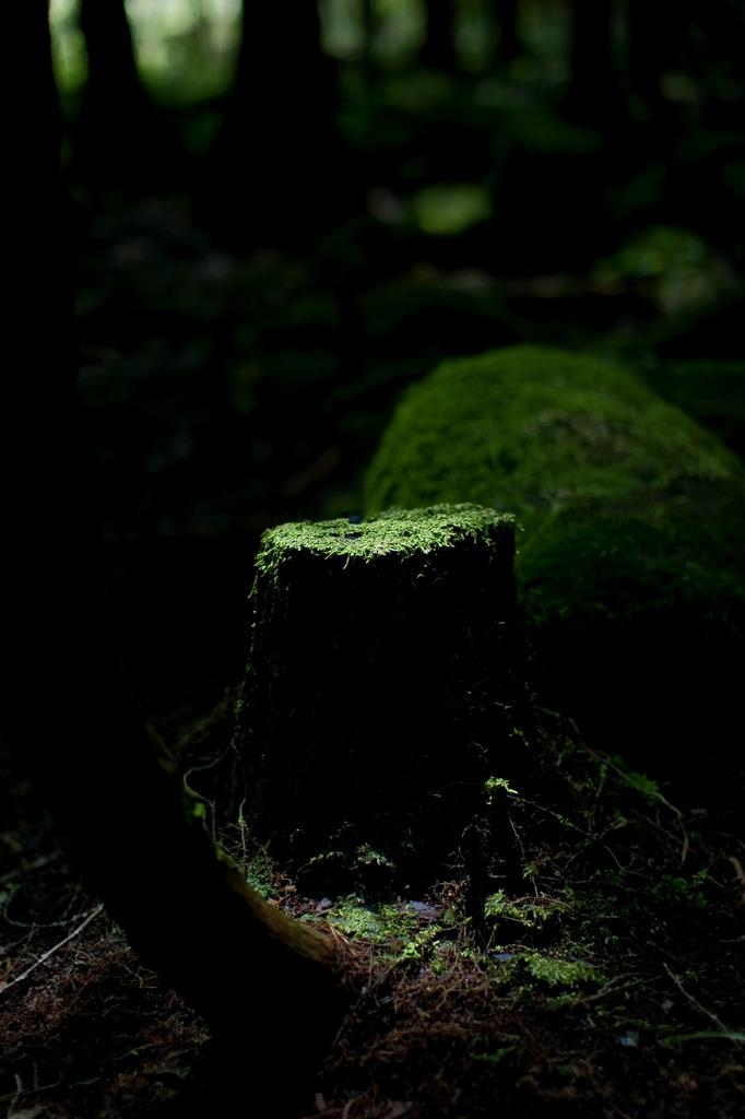 湿度 室生の森