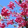 秋のピンク