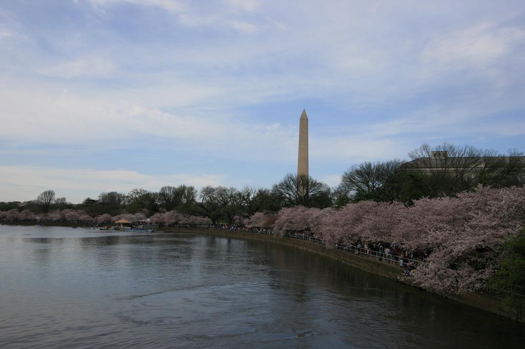 ワシントンDC 桜祭り