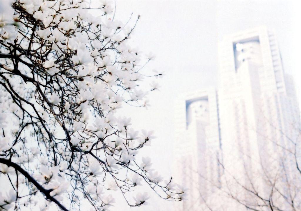 木蓮と都庁