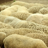 羊海(ようかい)
