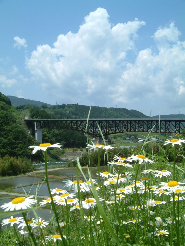 鉄橋と野花