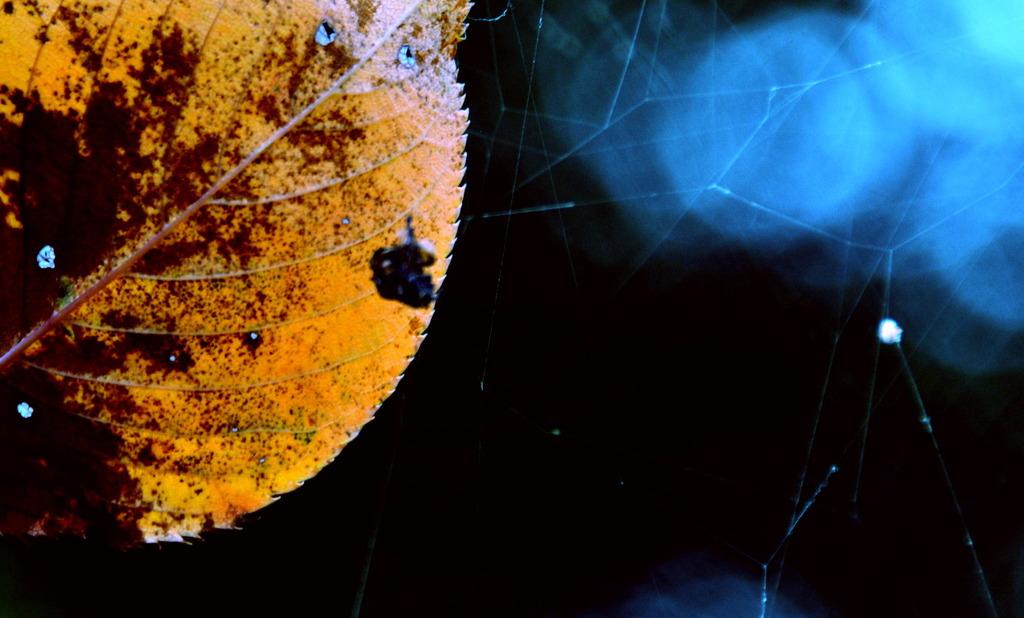 葉っぱと蜘蛛の巣