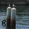 小樽埠頭にて