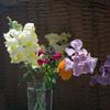 春先の切花