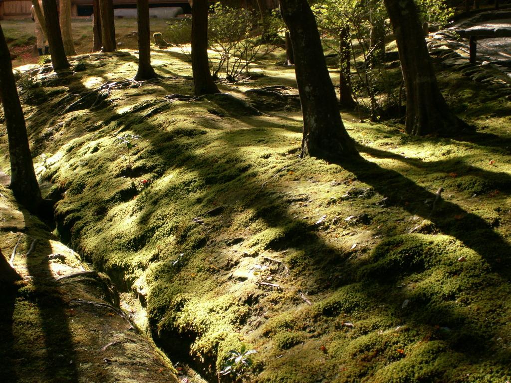 京都 秋の苔寺