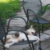 警戒心のカケラも無い猫 その1