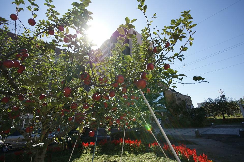 りんご並木で光を浴びて