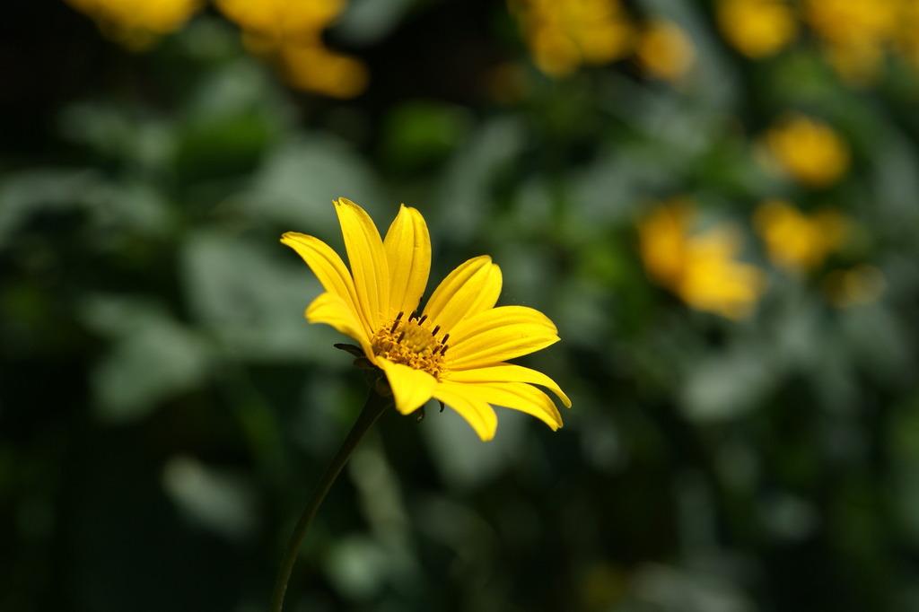 高原で撮ったけど、その辺にある花(^_^;