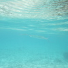 透明な魚その2
