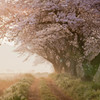 季節はずれの桜物語