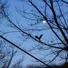月と飛栗鼠