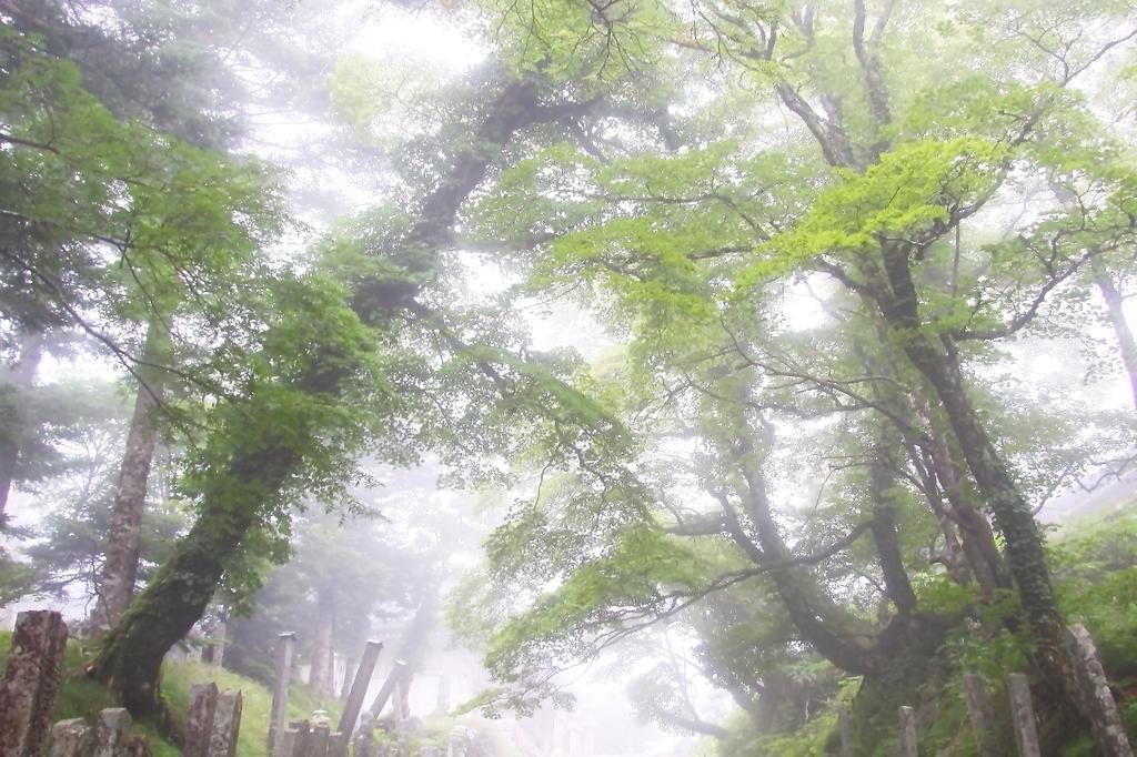 霧の大峰山頂