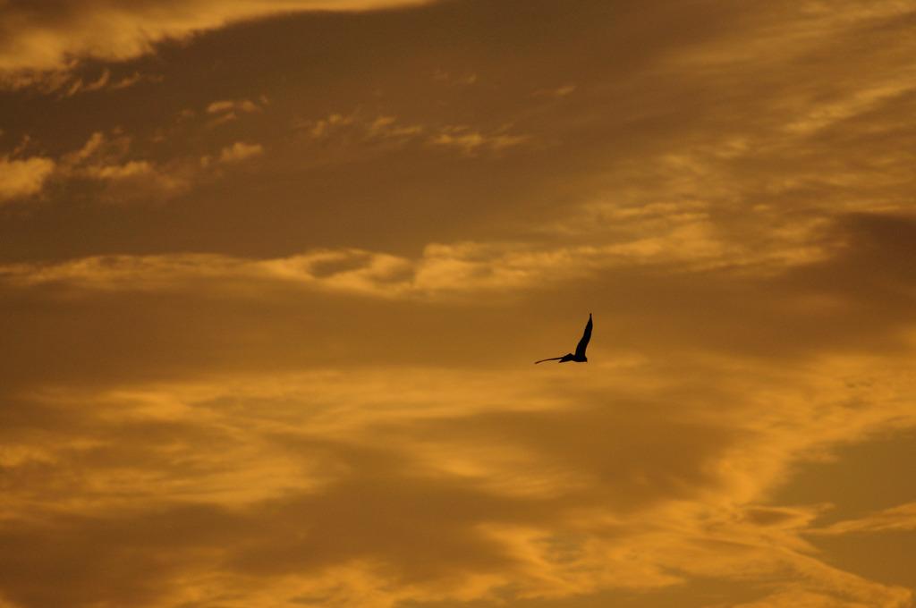 黄金色の空の孤独