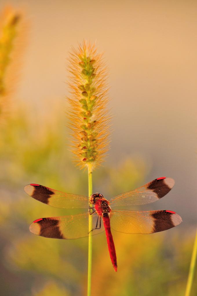 夕方の草場に真紅