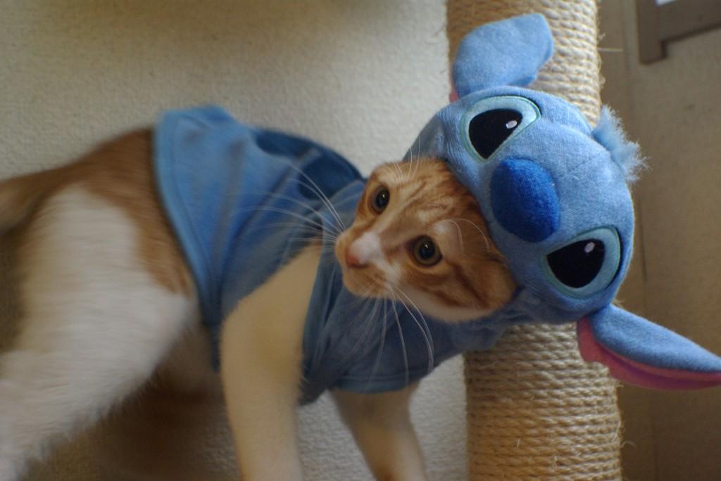 Stitch eat KOTETSU !!  No.07