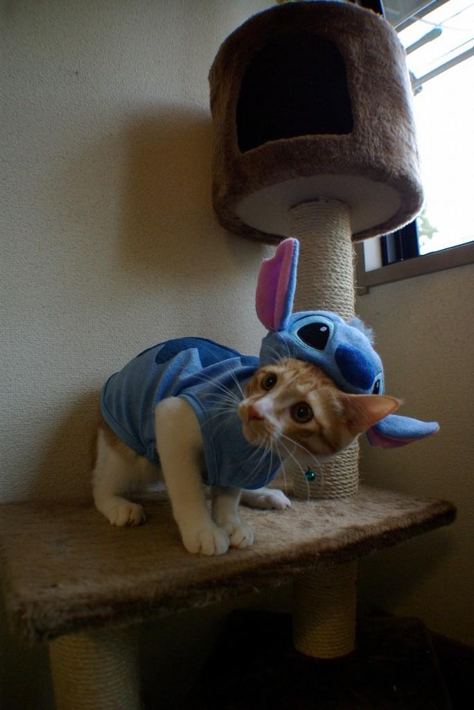 Stitch eat KOTETSU !!  No.02