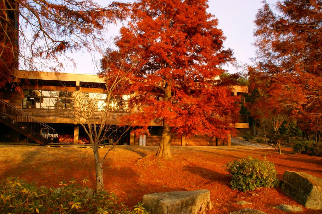 落羽松の紅葉