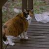 オトモダチのネコ「ミケちゃん」04