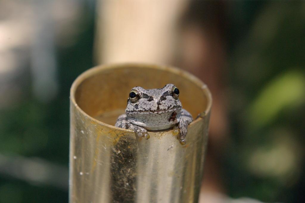 「筒」の中の蛙