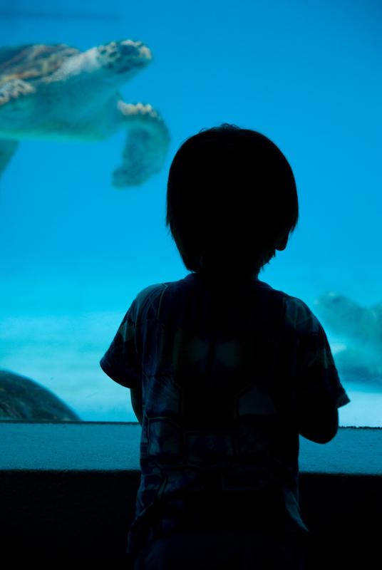 子供、ウミガメ見つめあい