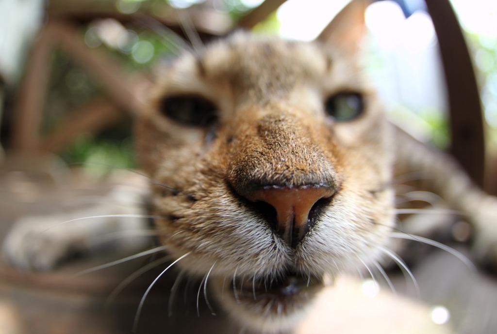 キジ太:寄り目