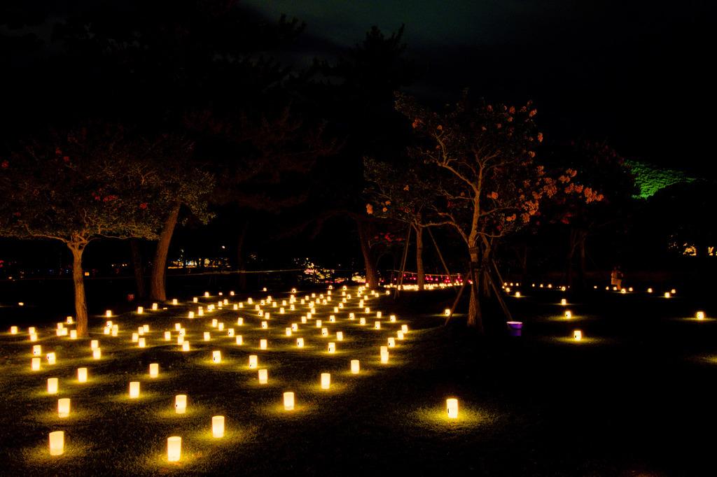 なら燈花会-灯りの道