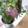 とある喫茶店のお花