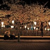 それぞれの夜桜