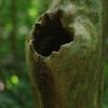 森の中の隠れ家