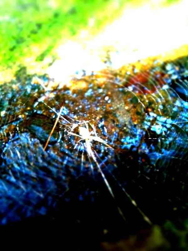 水面のクモの巣