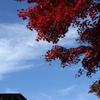 紅葉`10乗鞍編