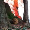 安曇野にゃんこ(初冬編)