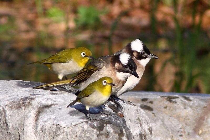 小鳥の学校
