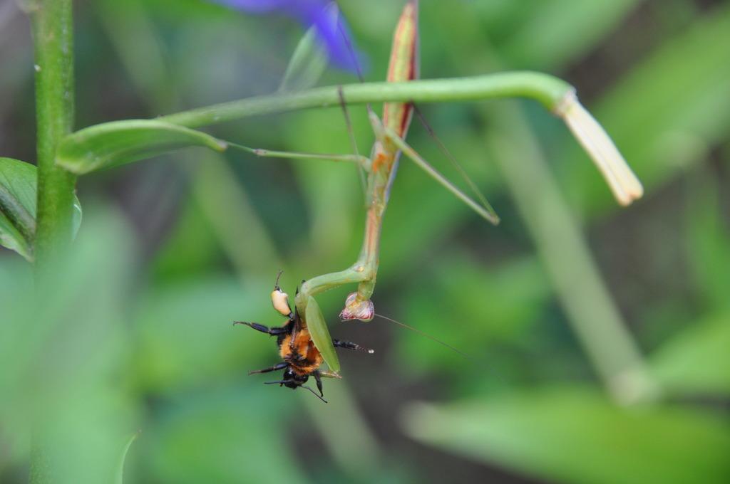 ハチをキャッチ