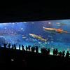 沖縄 ちゅら海水族館