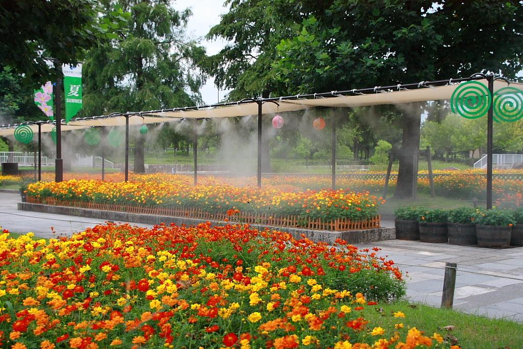 花に霧吹き