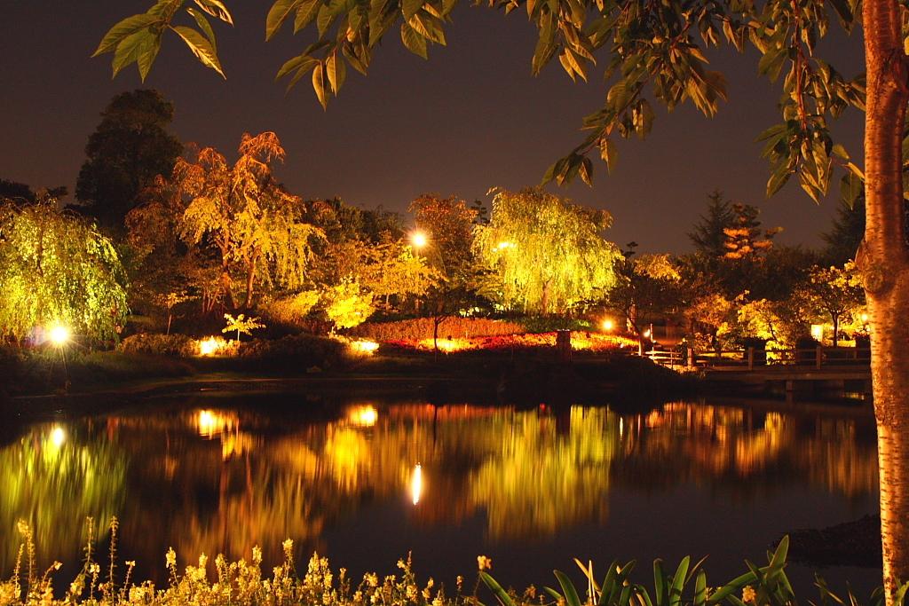 夜景 紅葉2