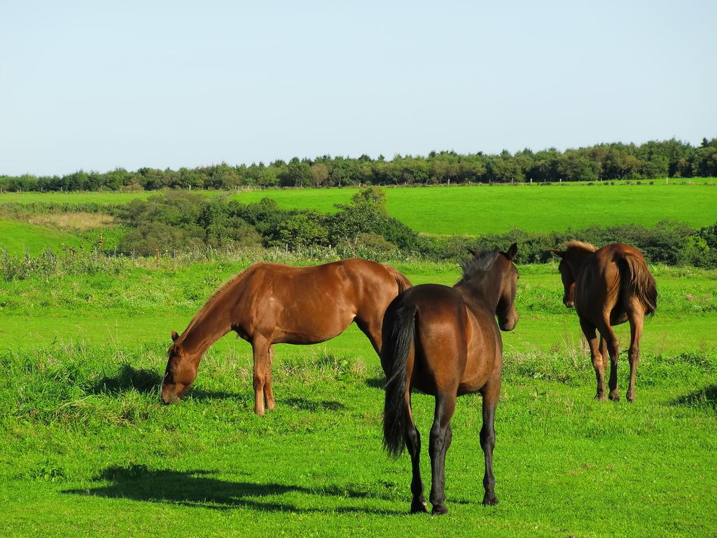 牧草を食べる馬