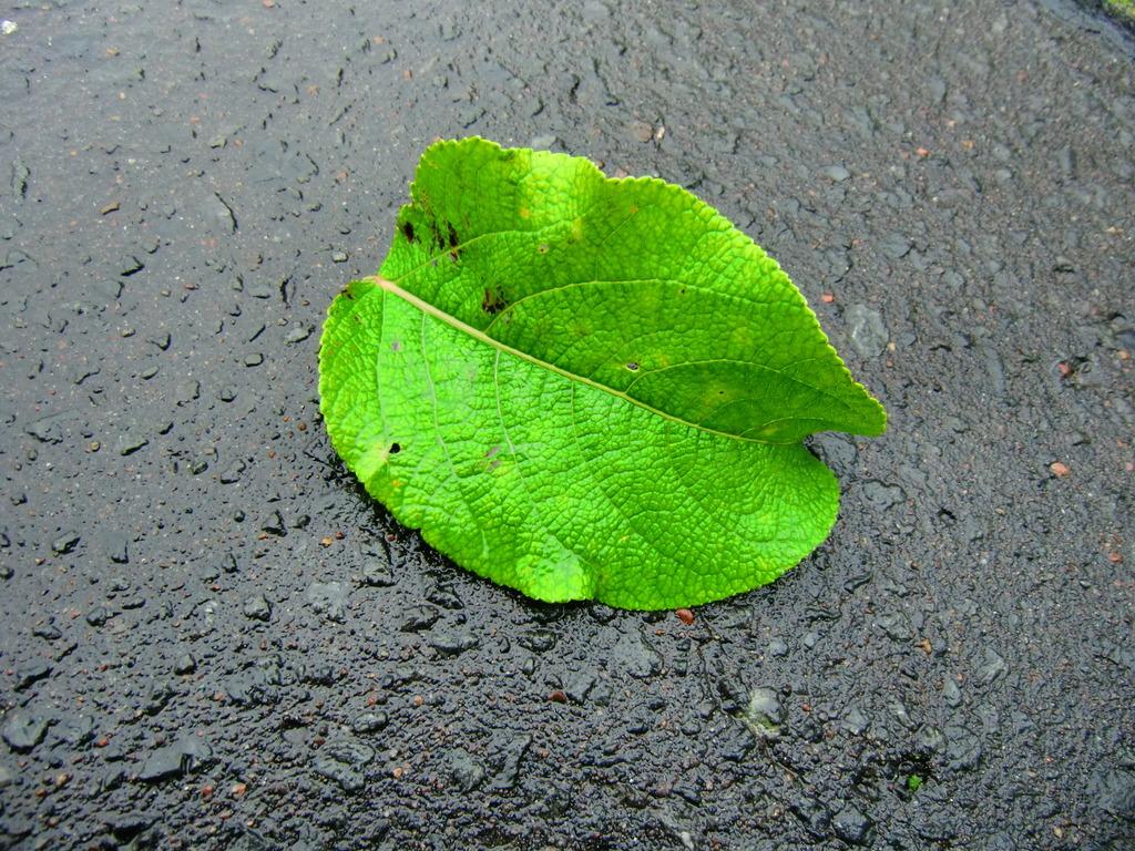 雨上がりに葉