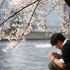 櫻の木の下で