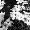 道端に咲く花は美しい