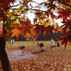 秋晴れの一こま