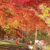秋晴れの一日