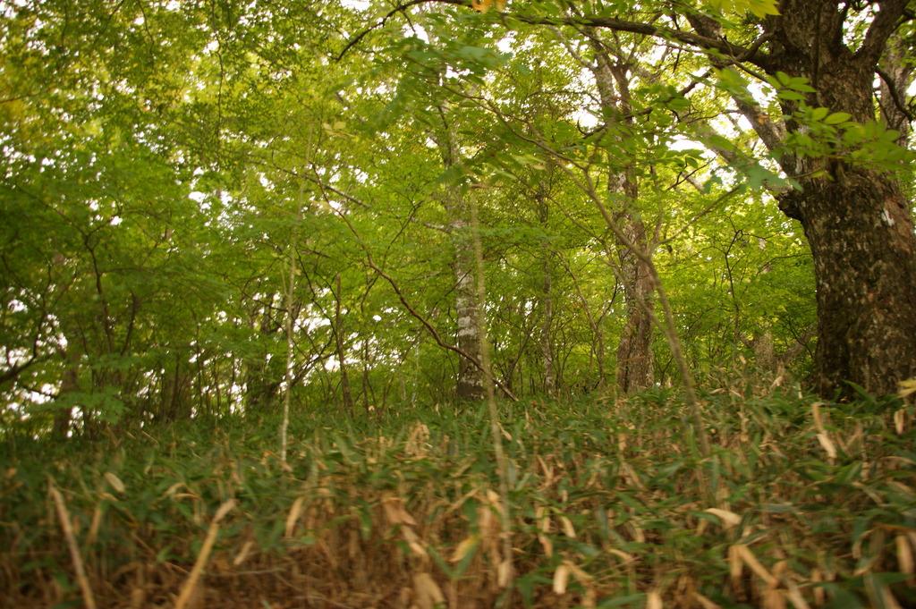 南国のブナの森