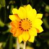 縫われた花