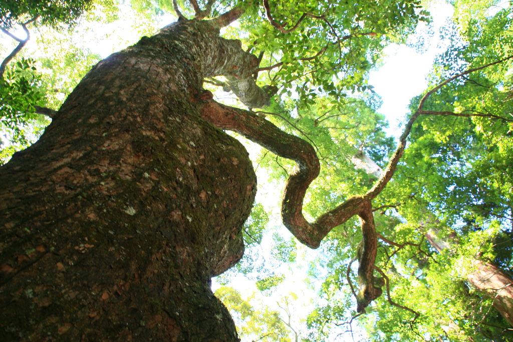 神の宿る木