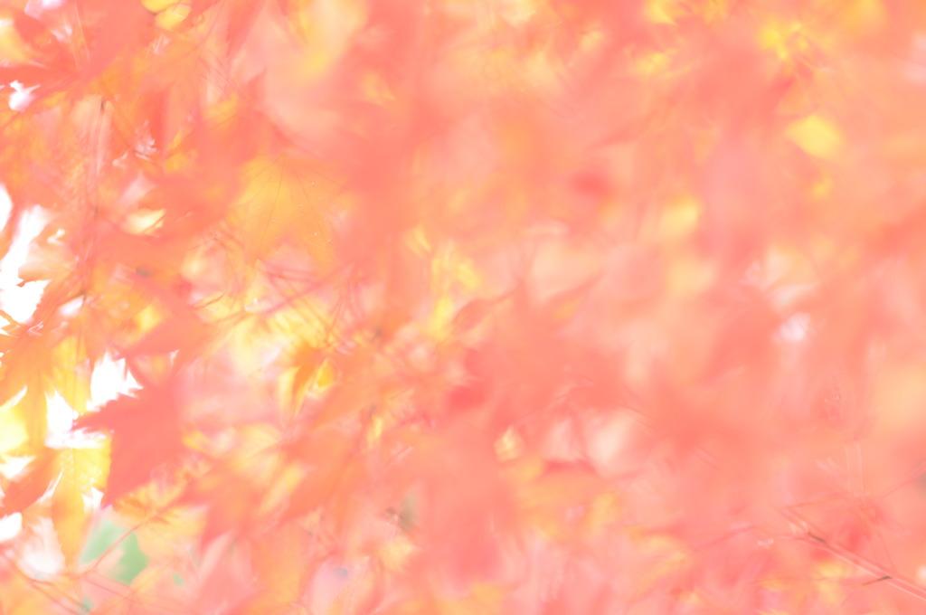 秋深まる。。