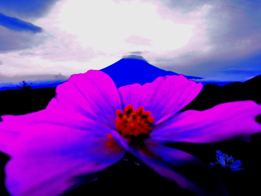 Cosmo mt.Fuji